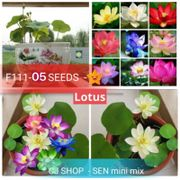 Mix Color lotus flowers seeds .